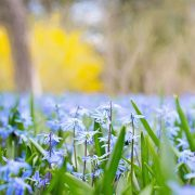 Your Wellness Centre Naturopathy - Spring Allergies